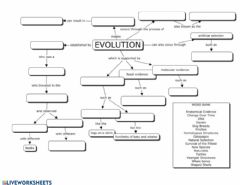 Interactive worksheet Evolution Review