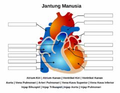 Interactive worksheet Jantung Manusia