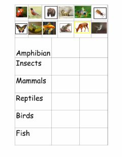 Interactive worksheet Grouping Living Things