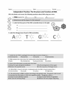 Interactive worksheet DNA Independent Practice