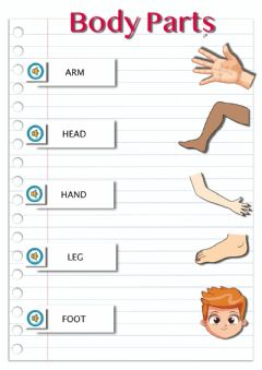 Interactive worksheet MBody parts-1