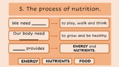 Ficha interactiva The process of nutrition