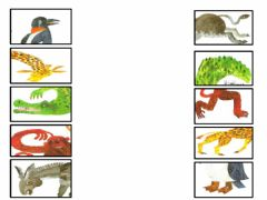 Interactive worksheet Draw a line to match the front half each animal with its back