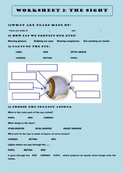 Interactive worksheet Parts of the eye
