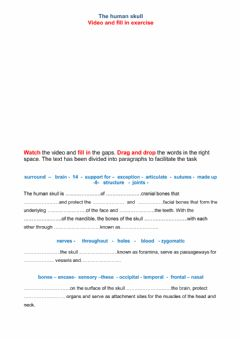 Interactive worksheet The human skull
