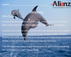 Interactive worksheet Dolphins