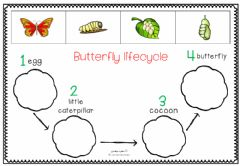 Interactive worksheet The Lifecycle of the Butterfly