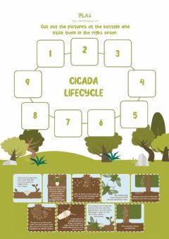 Interactive worksheet Searching for Cicada - Cicada Life Cycle