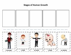 Interactive worksheet Stages of Human Growth
