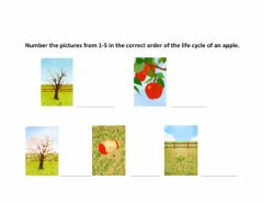 Interactive worksheet Apple Tree Life Cycle