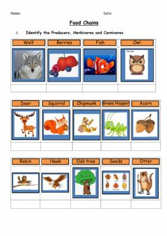 Interactive worksheet Food chain interaction