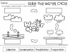 Ficha interactiva Water cycle review