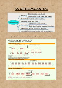 Interactive worksheet Os determinantes.