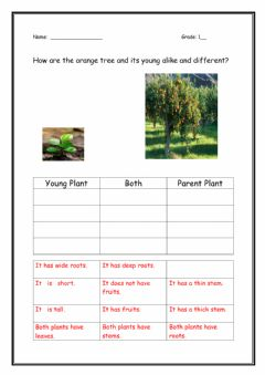 Interactive worksheet How are plants alike and different?