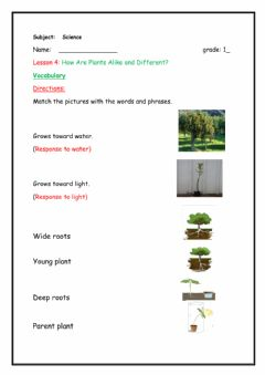 Ficha interactiva How are plants alike and different? vocab