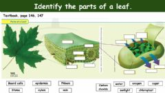 Interactive worksheet Parts of a LEAF