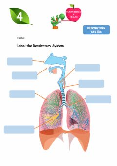 Interactive worksheet Respiratory System