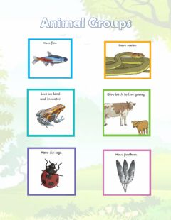 Interactive worksheet Animal groups