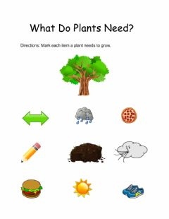 Interactive worksheet Plants needs