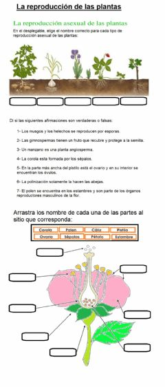 Interactive worksheet La reproduccion de las plantas