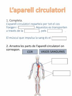 Interactive worksheet APARELL CIRCULATÒRI