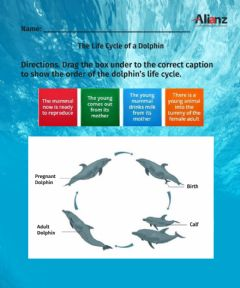 Interactive worksheet Life Cycle of Dolphins