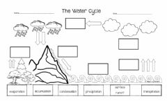 Ficha interactiva Water Cycle Label Test