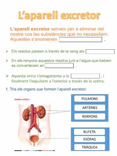 Interactive worksheet L'aparell excretor