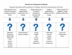 Interactive worksheet Animal Groups for Protection