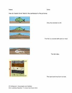 Interactive worksheet Fossilization for Beginners