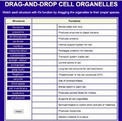 Ficha interactiva Cell organelles