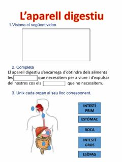 Interactive worksheet L'aparell digestiu