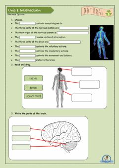 Interactive worksheet Nervous system
