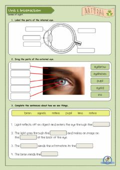 Interactive worksheet Sense of sight