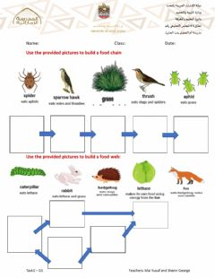 Interactive worksheet Food Chain and Food web- Task1