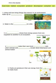 Interactive worksheet Food Chain Review