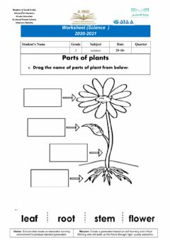 Interactive worksheet Parts of plants