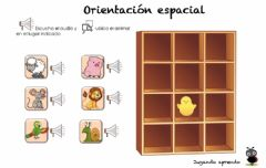 Interactive worksheet Ordenando animales