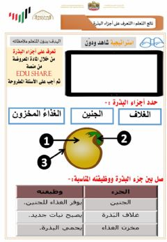 Interactive worksheet ورقة عمل أجزاء البذرة