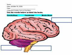 Interactive worksheet Parts of the Brain
