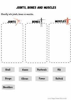 Interactive worksheet Joints, bones and muscles