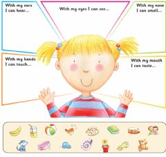 Interactive worksheet Five senses: classify