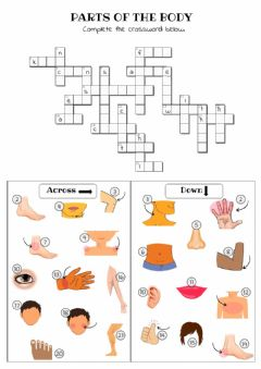Interactive worksheet Parts of the body crossword