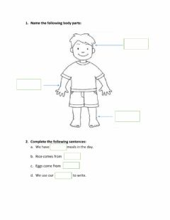 Interactive worksheet Body parts and food sources