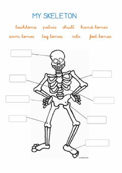 Ficha interactiva My skeleton