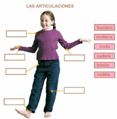 Interactive worksheet Las articulaciones