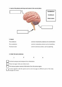 Interactive worksheet Interaction