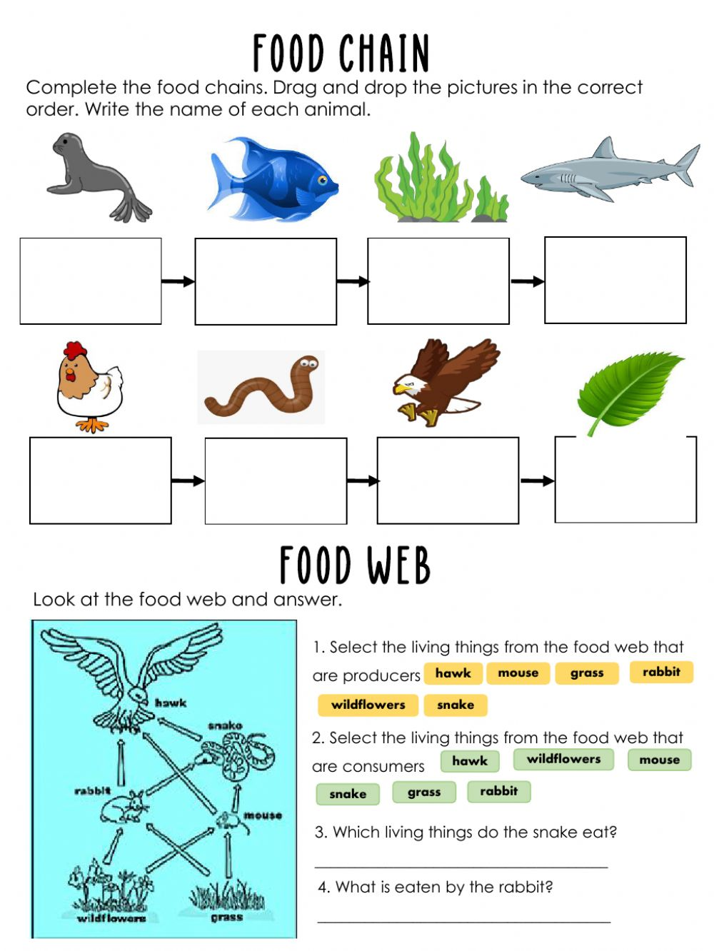 Food chain interactive exercise