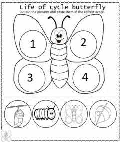 Interactive worksheet Butterfly life cycle