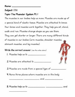 Interactive worksheet The Muscular System Pt.1